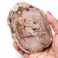 Petrified fossil wood slice