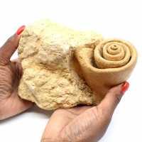 Gastropod fossil