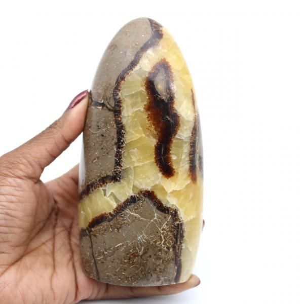 Polished septaria stone
