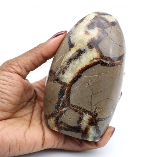 Polished septaria rock